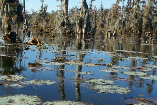 Breaux Bridge, LA: swamp