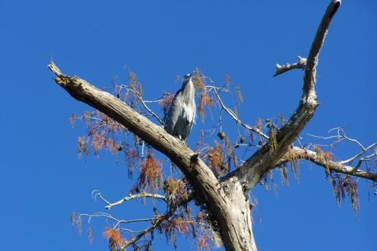 Breaux Bridge, LA: One of the birds.