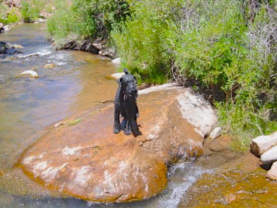 Pack Creek Ranch: Even my Dog had fun just 10 minutes from the Ranch.
