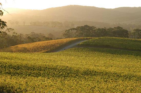 Adelaide Hills, Australien: Driveway