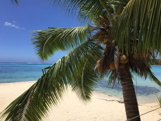 Haapiti, Polinesia francese: photo3.jpg