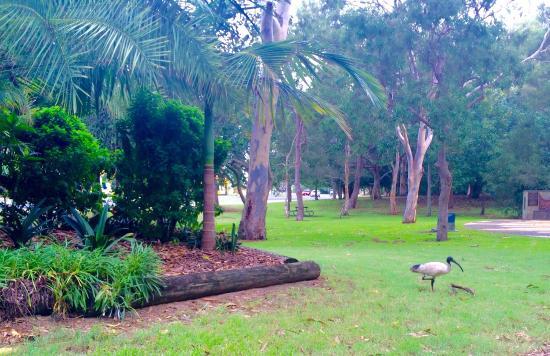 Broadbeach, Australien: photo8.jpg