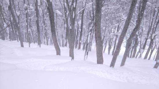 Ajigasawa-machi, Jepang: Untracked powder in the trees!