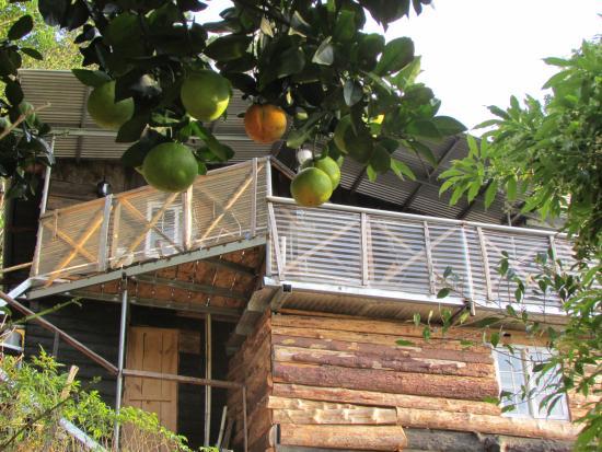 Provincia di Chiriqui, Panama/Panamá: Vista desde el Jardin Organico