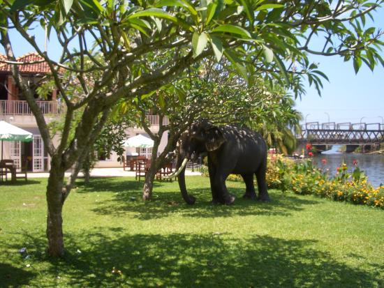 Aida Ayurveda & Holistic Health Resort: This is the riverside garden with ornamental elephant