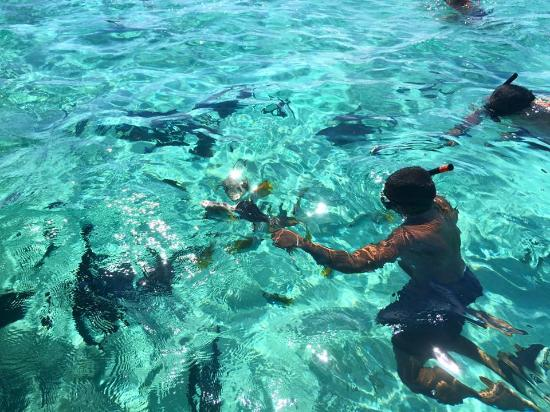 Muri, Cook Eilanden: Fish food!