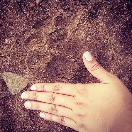 Balule Private Game Reserve, Sudáfrica: A day at Roamers Rest Safari lodge