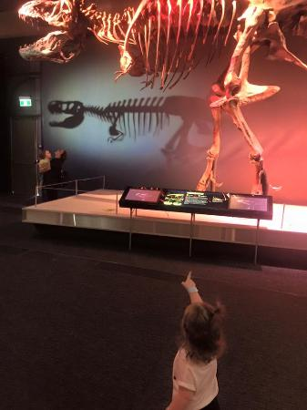 Newcastle, Australien: Dinosaur exhibition