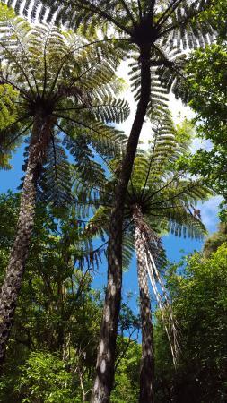 Abel Tasman National Park, New Zealand: Fern Trees