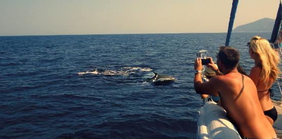 Skiathos Town, Grekland: dolphins on Aegeo_h