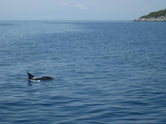 Skiathos Town, Grekland: dolphins on Aegeo_e