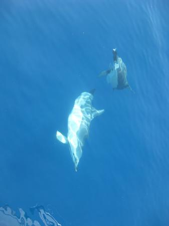Skiathos Town, Grekland: dolphins on Aegeo_d
