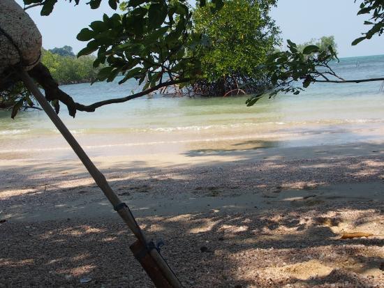 de mangroven op koh phayam picture of ko phayam ranong province rh tripadvisor co za