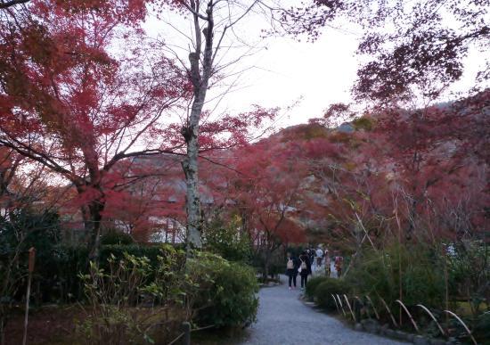 Tenryuji Temple: 12月上旬ですと空いています