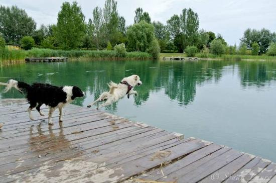Agriturismo Ai due laghi del Verginese : area cani dedicata