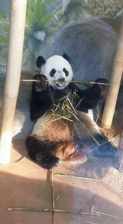 Memphis Zoo: FB_IMG_1454760604643_large.jpg