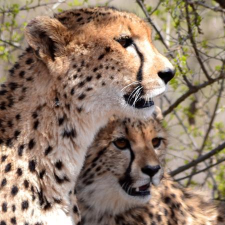 Марлот-Парк, Южная Африка: Cheetah - very special