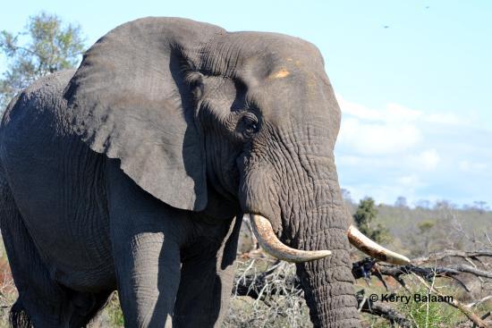 Марлот-Парк, Южная Африка: Elephant