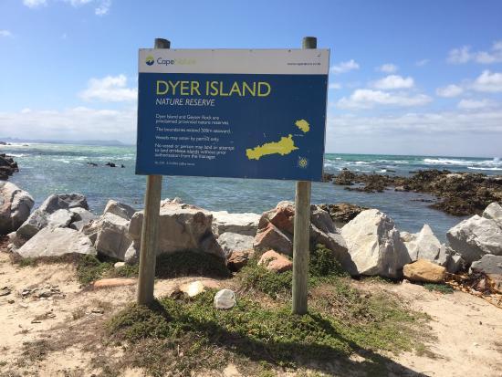 Gansbaai, Güney Afrika: Great White Shark Tours