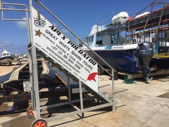 Gansbaai, Zuid-Afrika: Great White Shark Tours
