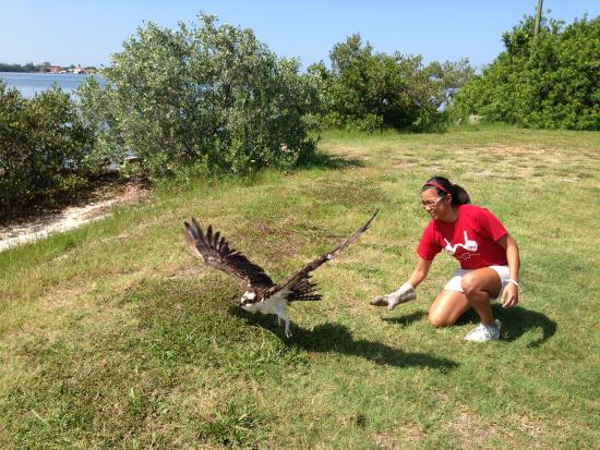 Save Our Seabirds: Osprey Release