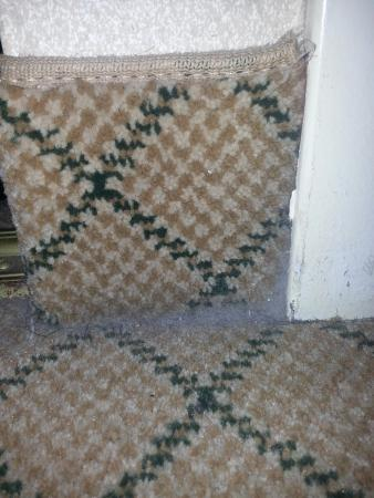 Johnson City, Τενεσί: Carpet filth