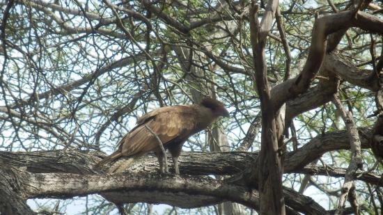 Kralendijk, Bonaire: One of the birds of the park