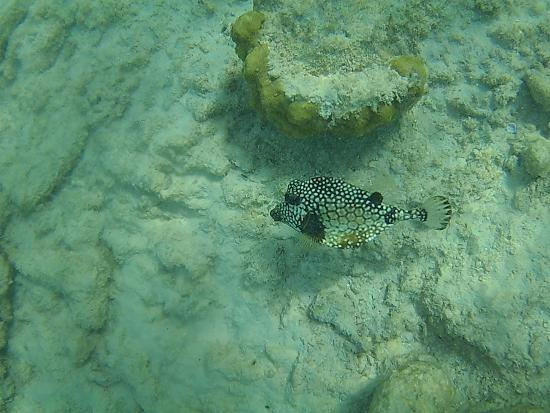 Kralendijk, Bonaire: Behind the water at the Bonaire Marine Natinal Park