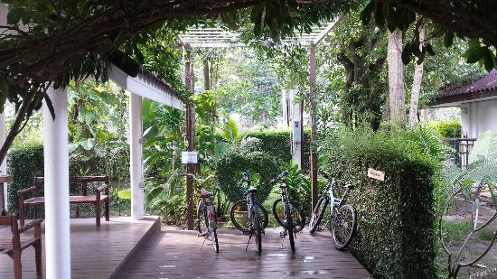 ลิปะน้อย, ไทย: Bikes to be rented freely.