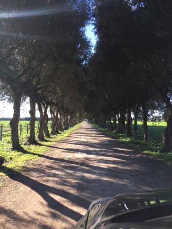Capaccio-Paestum, Italia: photo7.jpg