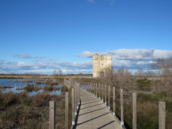 Aigues-Mortes, Frankrike: tour carbonniere