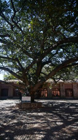 Amatitan, Mexico: The tree of energy @ Library Yard