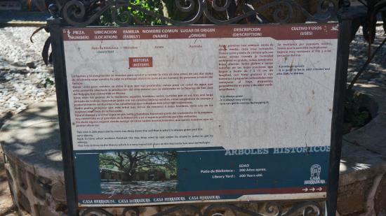 Amatitan, Mexico: Description of the  tree of energy