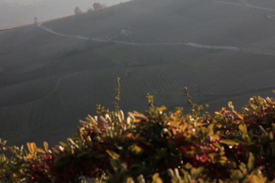 Serralunga d'Alba i grandi vigneti del barolo in autunno in langa,....