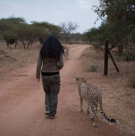 Hoedspruit, Sudáfrica: Walking with Cheetahs