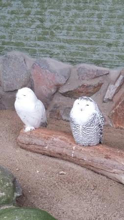 Antwerp Zoo (Dierentuin): 20160206_135605_large.jpg