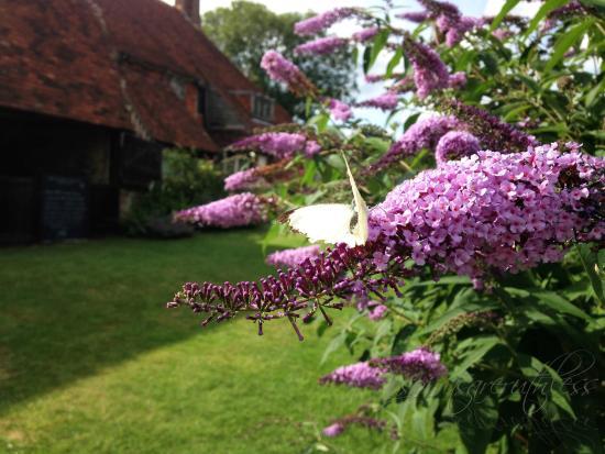 Tenterden, UK: Smallhythe