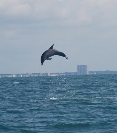 Murrells Inlet, Güney Carolina: Dolphin getting some air
