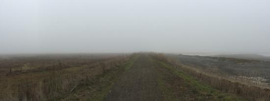 Petaluma, CA: During Winter mornings, fog can cover the park