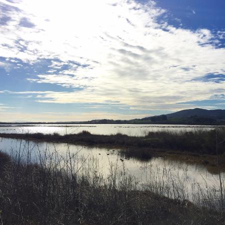 Petaluma, CA: Looking toward the east, high tide fills the marshlands