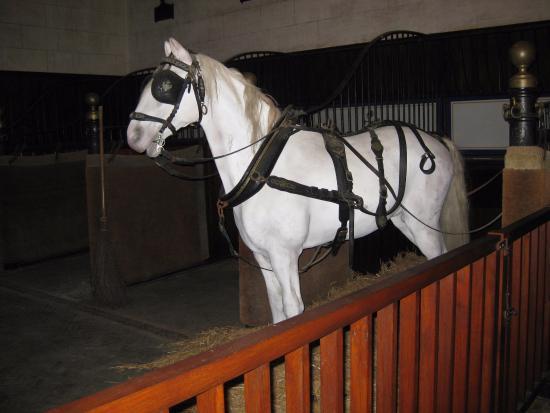 Κέντρο, Γαλλία: un cheval dans l'écurie