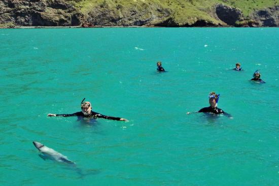 Akaroa, Nueva Zelanda: Begegnung mit den Delfinen. (c) www.hans-klueche.de