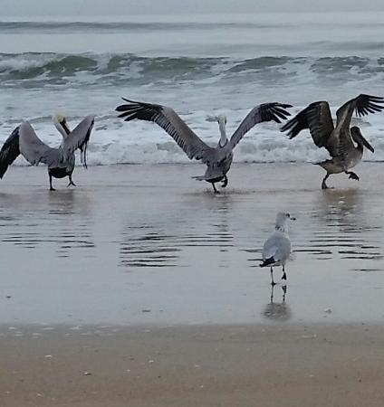 Flagler Beach, FL: These were obviously some Funky Pelicans on the beach right outside of the restaurant!