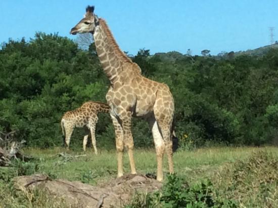 Port Elizabeth, Zuid-Afrika: One of many!