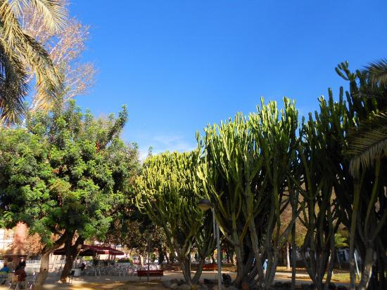 Jardin del Salitre