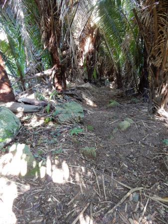 Sandy Bay, ฮอนดูรัส: The climb Carambola