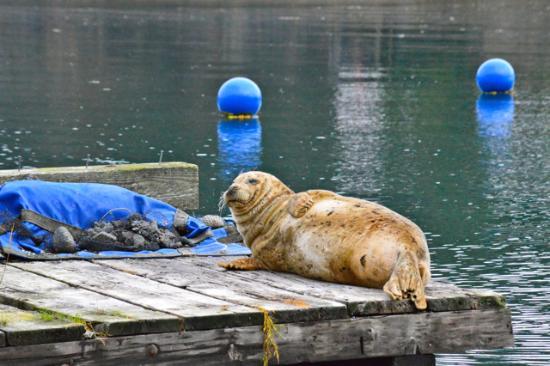 Halibut Cove, AK: Wildlife