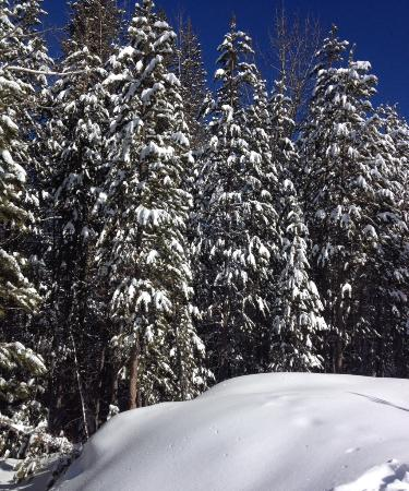 Squaw Valley, Kalifornia: The beauty after a snowfall @ Shirley Lake Trail