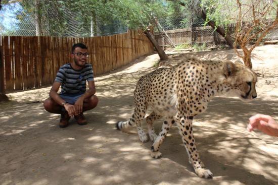 Oudtshoorn, Zuid-Afrika: Interação com Cheetah.