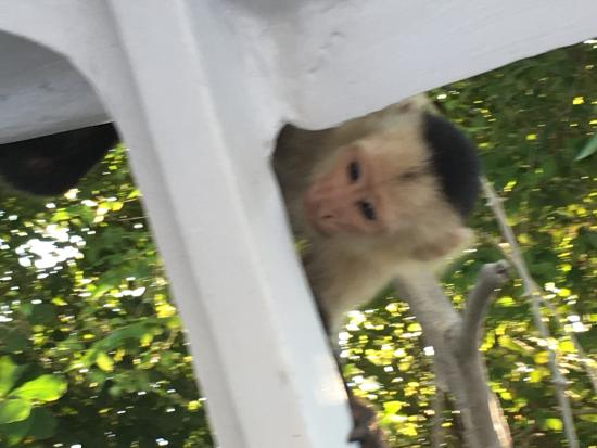 Tours Your Way: White faced monkey in the boat- so cute and friendly!